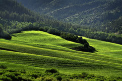Rolling Hills and Forest. In wilderness Royalty Free Stock Photography