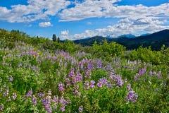 Rolling Hills från Patterson Mountain Arkivbilder