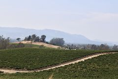 Rolling hills of a grape vineyard. In Napa valley california royalty free stock photography