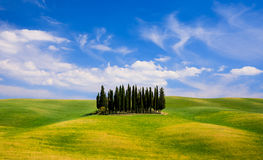 Rolling hills, green fields and cypresses trees in Tuscany, Ital Royalty Free Stock Photography