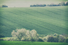Rolling hills and green grass fields Stock Photo