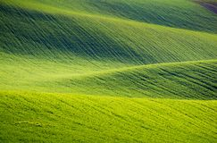 Rolling hills of green wheat fields. Amazing fairy minimalistic. Landscape with waves hills, rolling hills. Abstract nature background. South Moravia, Czech Stock Photography