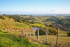 Rolling Hills i Nya Zeeland nära Auckland Arkivfoton