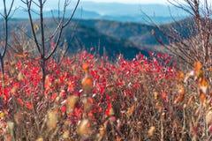 Rolling Hills im Fall Stockbilder