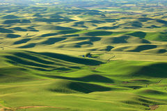 Rolling hills landscape in Palouse Royalty Free Stock Images