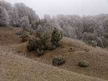 Rolling Hills Landschaftskälte und bereift Stockbild