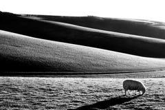 Rolling Hills med lågt ljus Arkivbilder