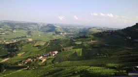 Rolling Hills med vingårdar Royaltyfri Bild