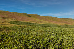 Rolling Hills nella prateria occidentale dell'alto-erba Fotografia Stock Libera da Diritti