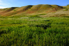 Rolling Hills nella prateria occidentale dell'alto-erba Immagine Stock