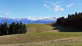 The Rolling Hills Of New zealand Royalty Free Stock Image