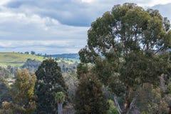 Rolling Hills no bushland Fotografia de Stock Royalty Free