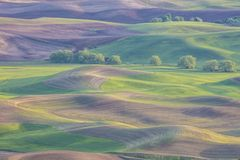 Rolling farmland hills and wheat fields in the Palouse region of Washington State America from Steptoe Butte near Colfax stock images