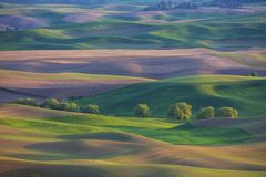 Rolling farmland hills and wheat fields in the Palouse region of Washington State stock image