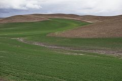Rolling Hills Of The Palouse Stock Photography