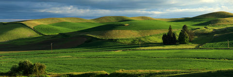 Rolling Hills Panoramic. A view of the Palouse from Steptoe Butte Royalty Free Stock Image