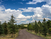 Rolling hills with pine trees and curved unpaved road Stock Images