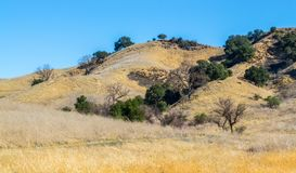Rolling hills in the Santa Monica Mountains of California. Rolling hills covered with golden grasses and green trees in the Santa Monica Mountains at Malibu Stock Photos