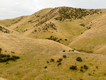 Rolling hills with sheep pasture grassland, NZ Royalty Free Stock Photos