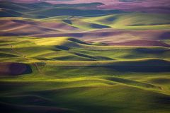Rolling hills spring. Rolling hill in the spring, farmlands in Palouse, Washington royalty free stock photo