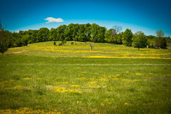 Rolling hills in summertime Royalty Free Stock Photo