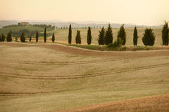 Rolling Hills in Toscana Immagine Stock