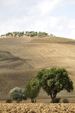 Rolling Hills, Tuscany Stock Photography