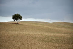 Rolling Hills, Tuscany Royalty Free Stock Photography