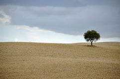 Rolling Hills, Tuscany Stock Photo