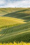 Rolling hills of Tuscany Stock Image