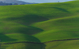 Rolling Hills of Tuscany, Italy Royalty Free Stock Image