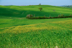 Rolling hills of Tuscany Stock Photo