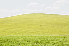 Rolling Hills in Val dOrcia Stock Photography