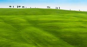 Rolling Hills verde con la primavera gialla del wildflower in Toscana Italia fotografia stock