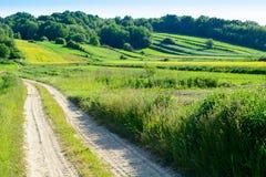 Rolling Hills verde in Roztocze, Polonia Immagine Stock Libera da Diritti
