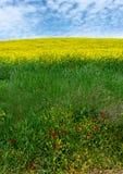 Rolling Hills verdi con i Wildflowers gialli balzano in Toscana Italia fotografie stock