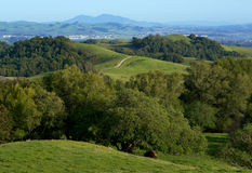 Rolling Hills verte dans le pays Photographie stock libre de droits