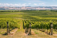 Rolling hills with vineyards in Marlborough region, New Zealand. Rolling hills with vineyards in Marlborough region, South Island, New Zealand royalty free stock images
