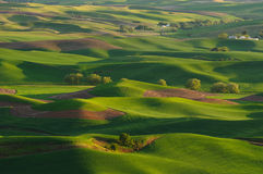Rolling hills and wheat fields Stock Image