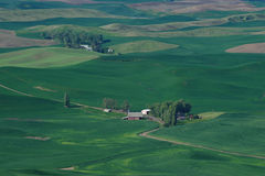 Rolling hills and wheat fields Royalty Free Stock Images