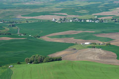 Rolling hills and wheat fields Royalty Free Stock Photography
