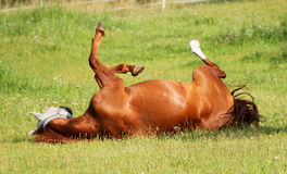 Rolling horse Stock Images