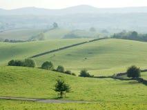 Rolling landbouwgrond dichtbij Kendal Stock Foto