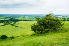 Rolling landscape of English midland in summer Stock Images