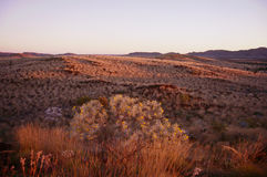 Rolling landscape in The Pilbara. Wildflowers grow in the harsh rocky environment of The Pilbara in Western Australia Royalty Free Stock Photography