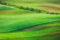 Rolling landscape of  South Moravia Stock Photography