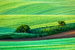 Rolling landscape of  South Moravia in the morning Royalty Free Stock Images
