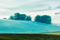 Rolling landscape of  South Moravia in the morning Royalty Free Stock Photography