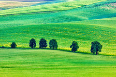 Rolling landscape of South Moravia with trees Stock Photos
