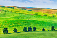 Rolling landscape of South Moravia with trees Royalty Free Stock Photos